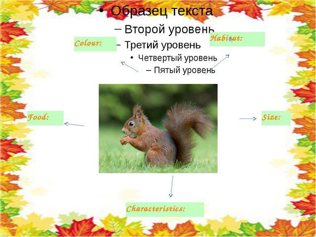 Colour: Habitat: Food: Characteristics: Size: