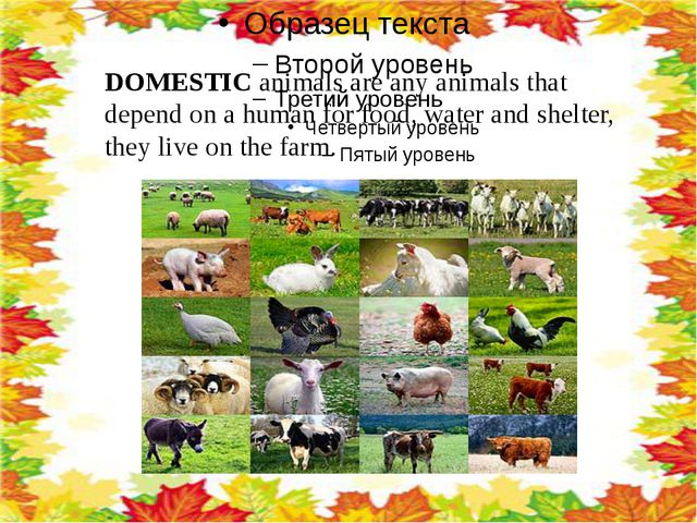 DOMESTIC animals are any animals that depend on a human for food, water and...