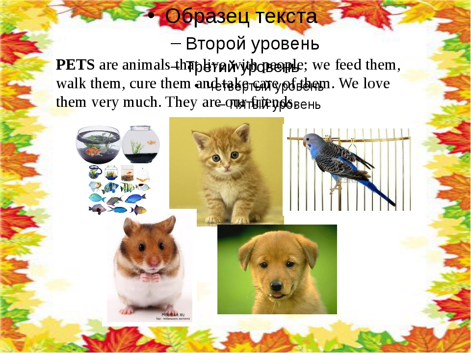 PETS are animals that live with people; we feed them, walk them, cure them a...
