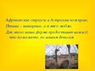 Африканские страусы в Астраханском краю, Птицы – шикарные, а я мясо люблю. Дл