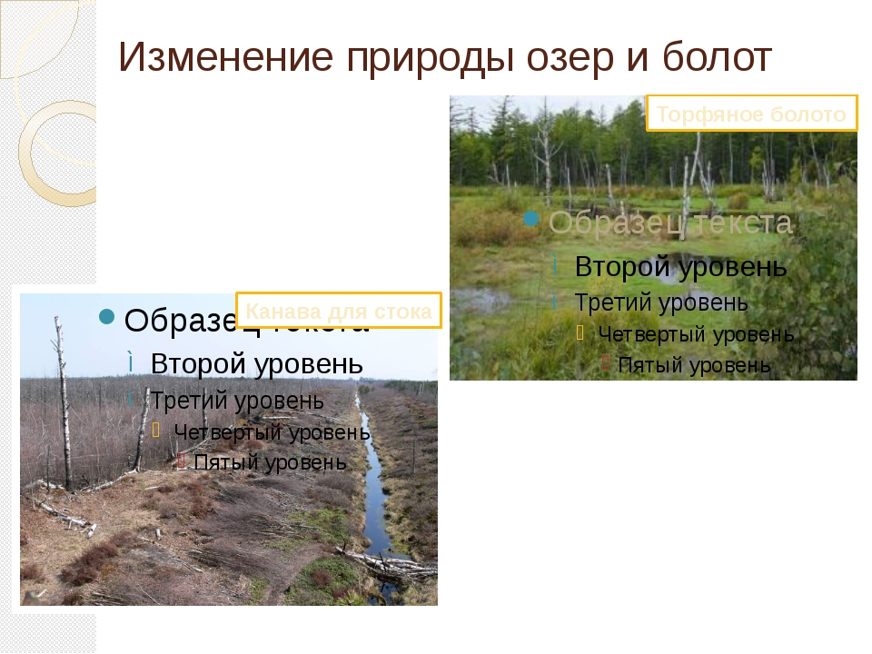 Изменение природы озер и болот Торфяное болото Канава для стока
