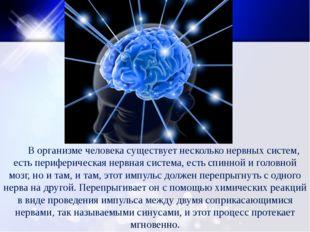 В организме человека существует несколько нервных систем, есть периферическа