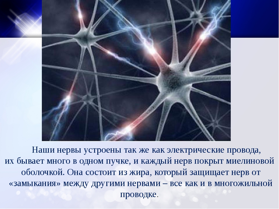 Наши нервы устроены так же как электрические провода, их бывает много в одно...