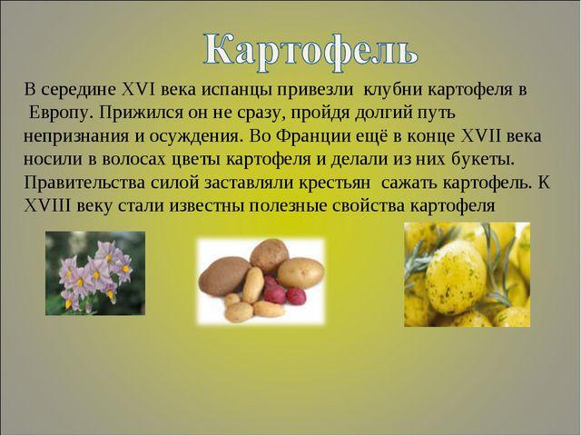 В середине XVI века испанцы привезли клубни картофеля в Европу. Прижился он н...