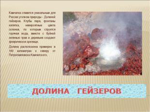 Камчатка славится уникальным для России уголком природы - Долиной гейзеров. К