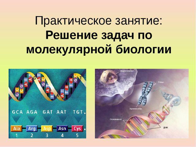 Практическое занятие: Решение задач по молекулярной биологии