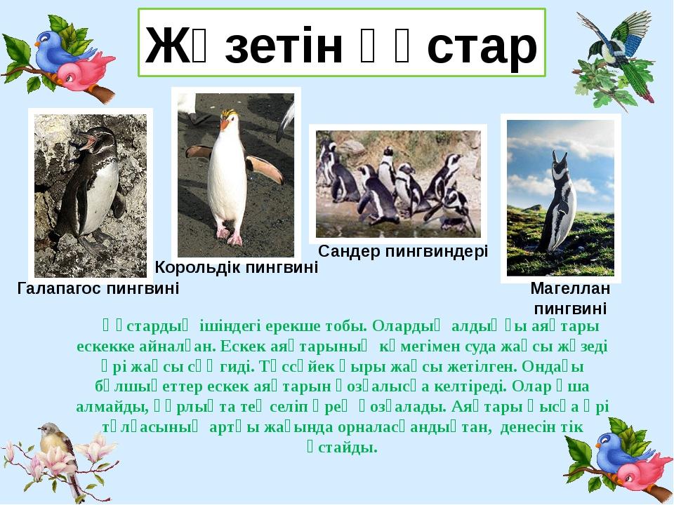 Жүзетін құстар Галапагос пингвині Сандер пингвиндері Корольдік пингвині Магел...