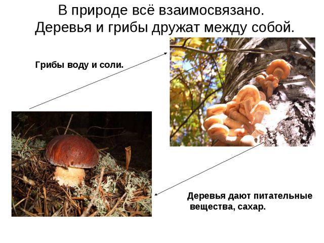 В природе всё взаимосвязано. Деревья и грибы дружат между собой. Деревья даю...