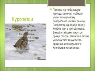 Куропатки Похожи на небольшую курицу: квохчат, собирая корм; по-куриному разг
