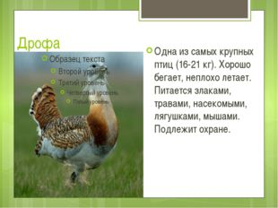Дрофа Одна из самых крупных птиц (16-21 кг). Хорошо бегает, неплохо летает. П