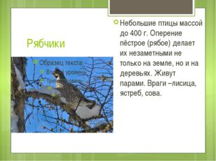 Рябчики Небольшие птицы массой до 400 г. Оперение пёстрое (рябое) делает их н