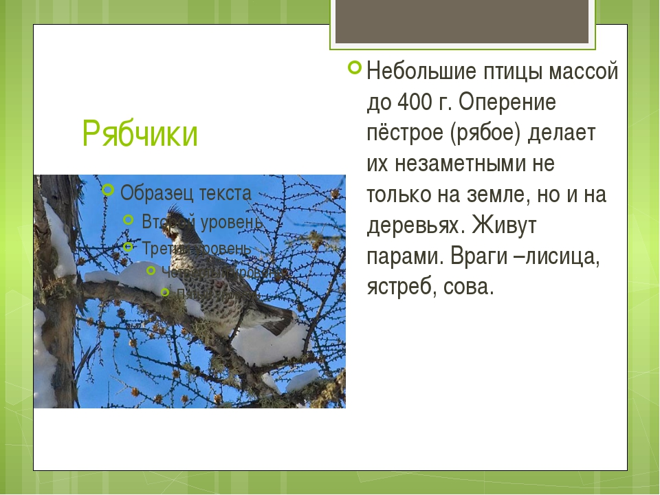 Рябчики Небольшие птицы массой до 400 г. Оперение пёстрое (рябое) делает их н...