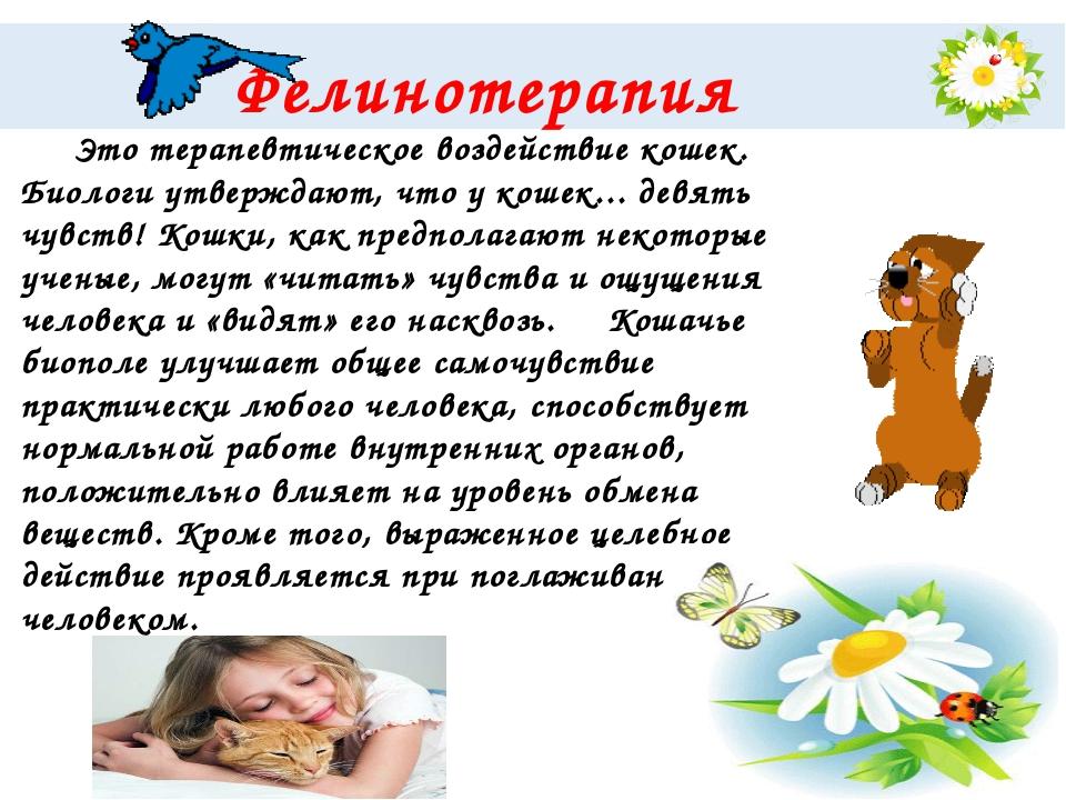 Фелинотерапия Это терапевтическое воздействие кошек. Биологи утверждают, чт...