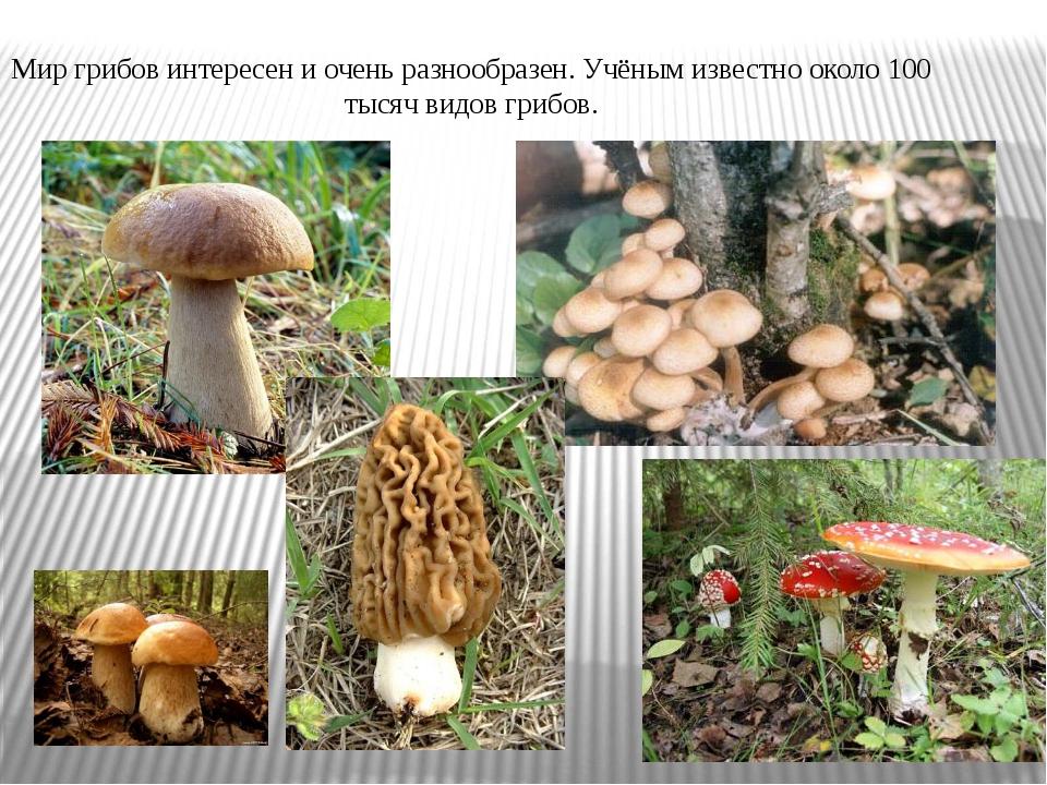 Мир грибов интересен и очень разнообразен. Учёным известно около 100 тысяч ви...