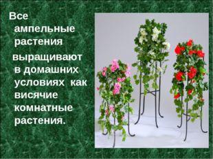 Все ампельные растения выращивают в домашних условиях как висячие комнатные