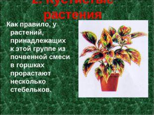 2. Кустистые растения Как правило, у растений, принадлежащих к этой группе из