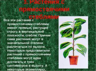 3. Растения с прямостоячими стеблями Все эти растения с прямостоячими стебля