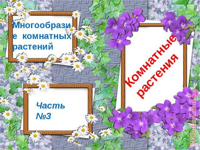 Комнатные растения Часть №3 Многообразие комнатных растений
