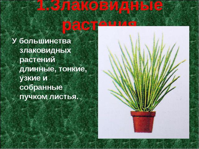 1.Злаковидные растения У большинства злаковидных растений длинные, тонкие, у...