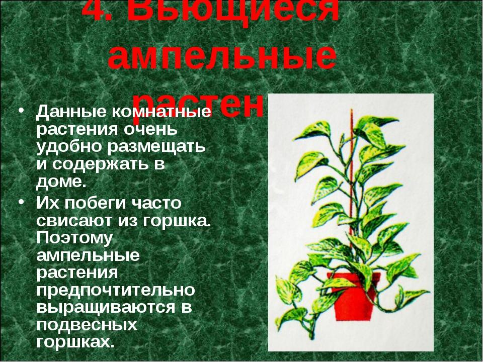 4. Вьющиеся ампельные растения Данные комнатные растения очень удобно размеща...