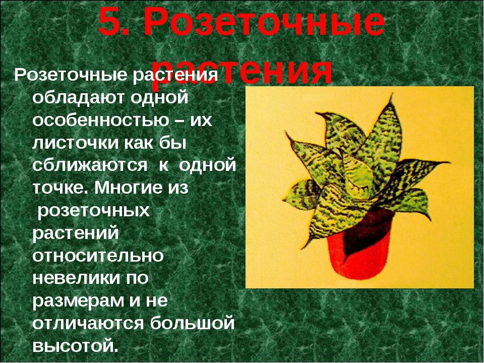 5. Розеточные растения Розеточные растения обладают одной особенностью – их...