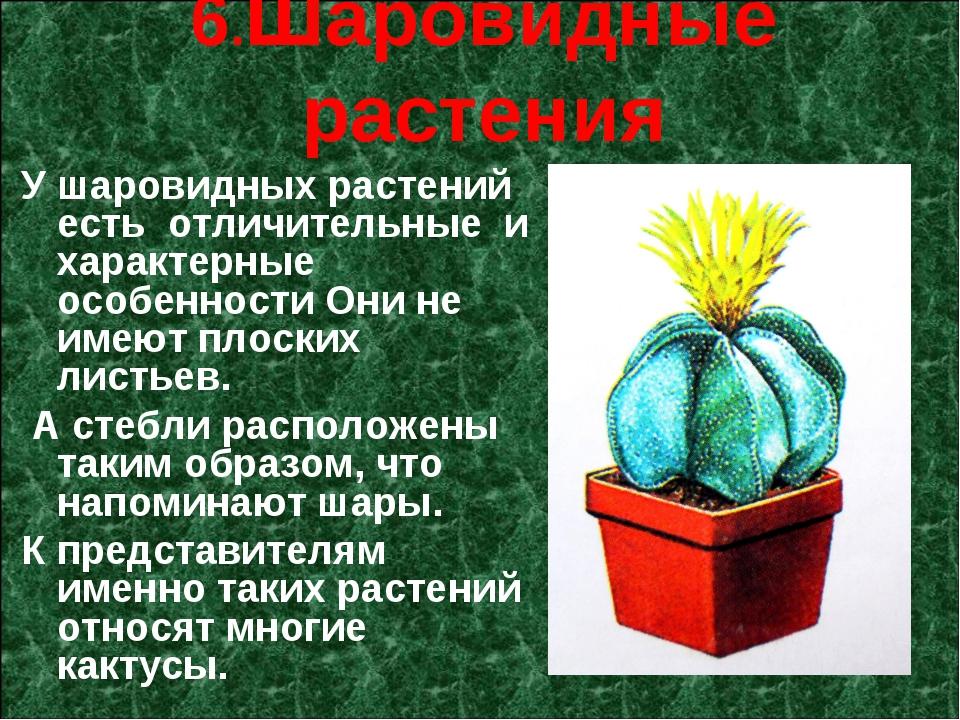 6.Шаровидные растения У шаровидных растений есть отличительные и характерн...