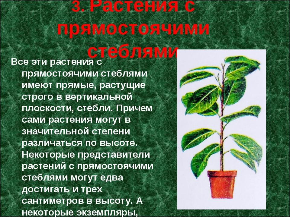 3. Растения с прямостоячими стеблями Все эти растения с прямостоячими стебля...