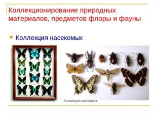 Коллекционирование природных материалов, предметов флоры и фауны Коллекция на