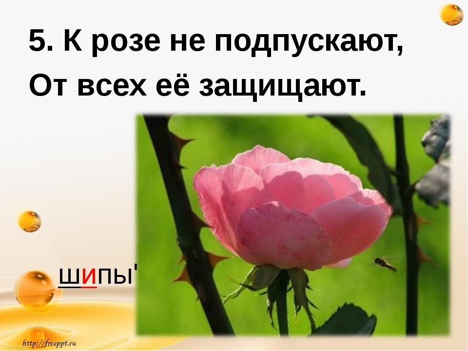 http://freeppt.ru 5. К розе не подпускают, От всех её защищают. шипы'