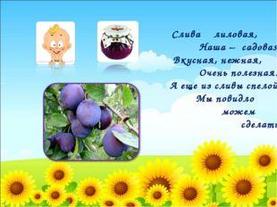 Слива лиловая, Наша – садовая, Вкусная, нежная, Очень полезная. А еще из сли