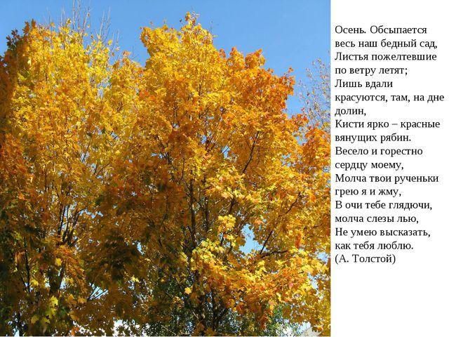Осень. Обсыпается весь наш бедный сад, Листья пожелтевшие по ветру летят; Л...