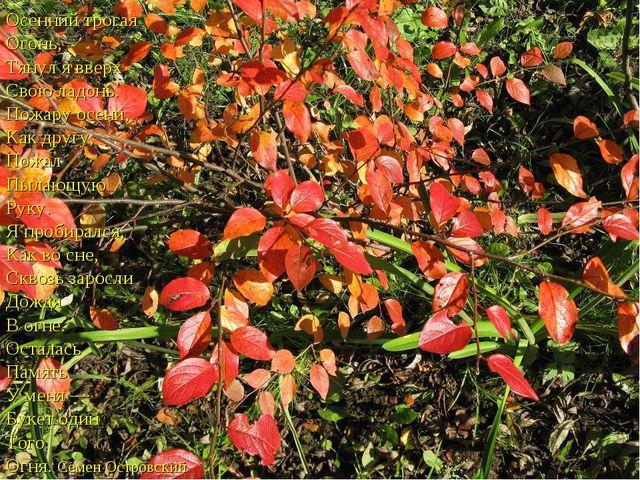 Осенний трогая Огонь, Тянул явверх Свою ладонь. Пожару осени, Как другу, Пож...