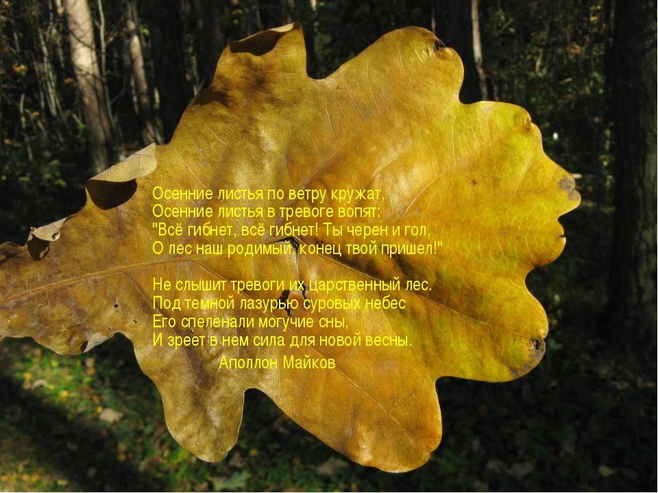 """Осенние листья по ветру кружат, Осенние листья в тревоге вопят: """"Всё гибнет,..."""