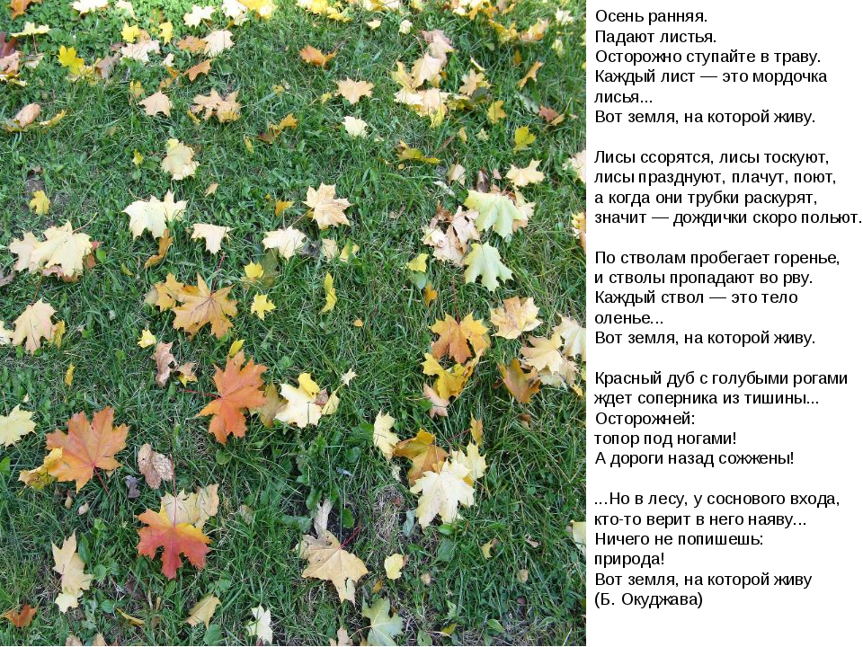 Осень ранняя. Падают листья. Осторожно ступайте в траву. Каждый лист — это м...