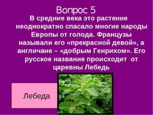 Вопрос 5 В средние века это растение неоднократно спасало многие народы Европ