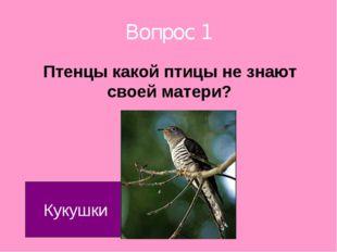 Вопрос 1 Птенцы какой птицы не знают своей матери? Кукушки