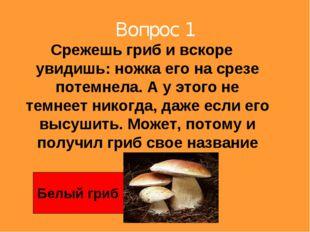 Вопрос 1 Срежешь гриб и вскоре увидишь: ножка его на срезе потемнела. А у это
