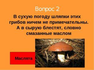 Вопрос 2 В сухую погоду шляпки этих грибов ничем не примечательны. А в сырую