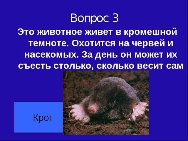 Вопрос 3 Это животное живет в кромешной темноте. Охотится на червей и насеком...