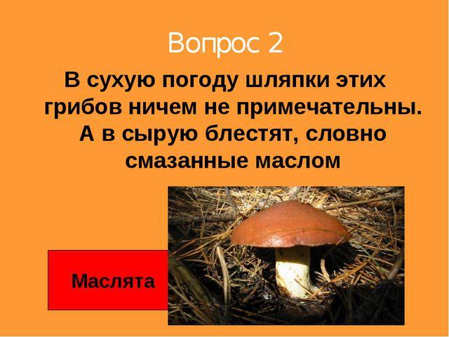 Вопрос 2 В сухую погоду шляпки этих грибов ничем не примечательны. А в сырую...