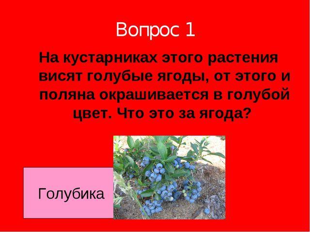 Вопрос 1 На кустарниках этого растения висят голубые ягоды, от этого и поляна...