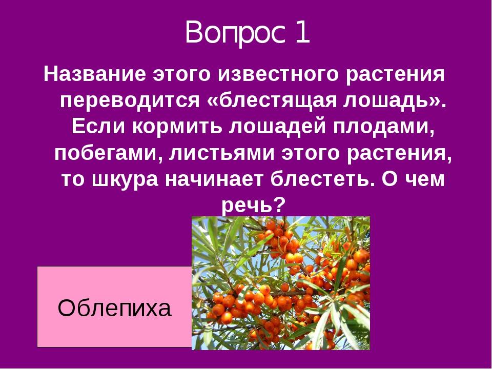 Вопрос 1 Название этого известного растения переводится «блестящая лошадь». Е...