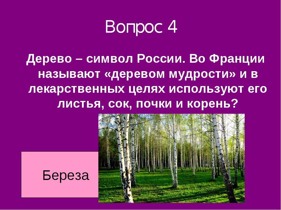 Вопрос 4 Дерево – символ России. Во Франции называют «деревом мудрости» и в л...