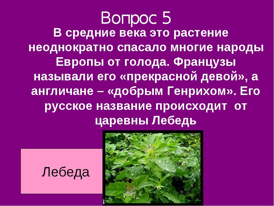 Вопрос 5 В средние века это растение неоднократно спасало многие народы Европ...