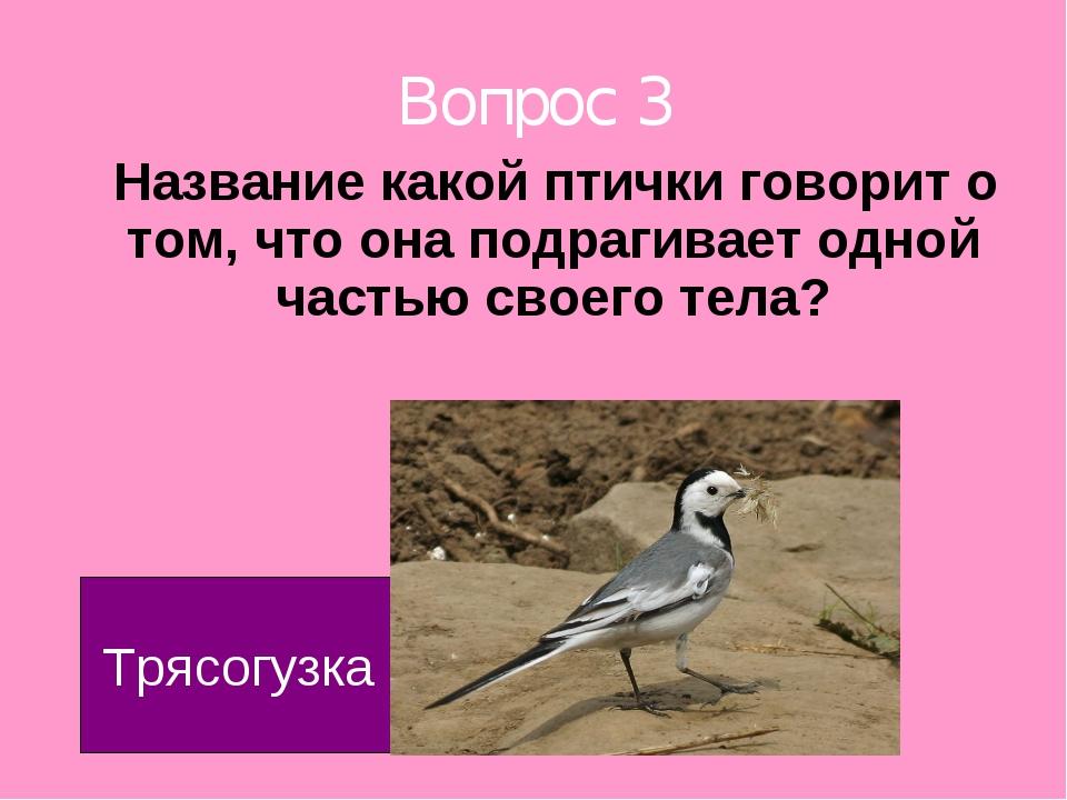 Вопрос 3 Название какой птички говорит о том, что она подрагивает одной часть...