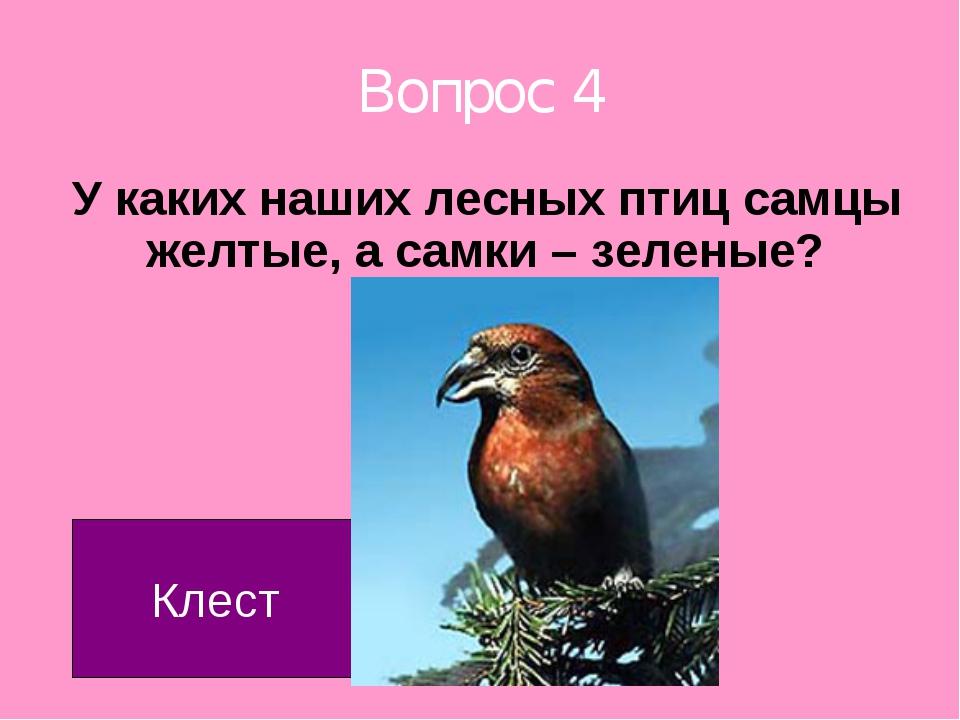 Вопрос 4 У каких наших лесных птиц самцы желтые, а самки – зеленые? Клест