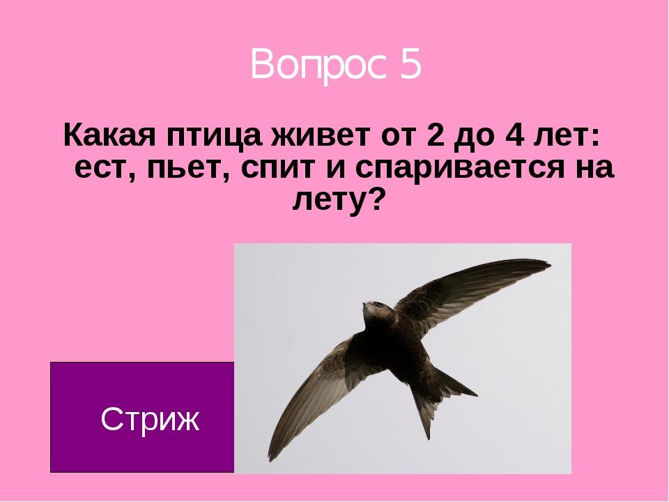 Вопрос 5 Какая птица живет от 2 до 4 лет: ест, пьет, спит и спаривается на ле...