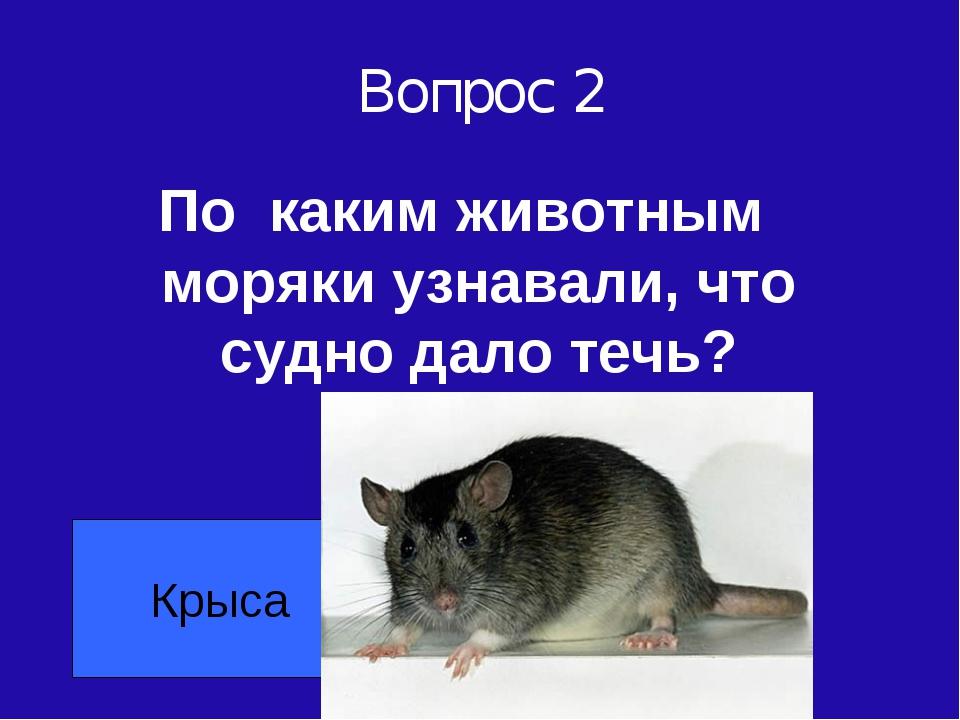 Вопрос 2 По каким животным моряки узнавали, что судно дало течь? Крыса