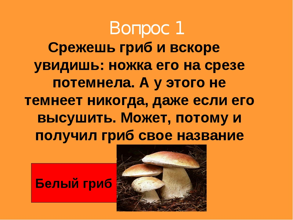 Вопрос 1 Срежешь гриб и вскоре увидишь: ножка его на срезе потемнела. А у это...