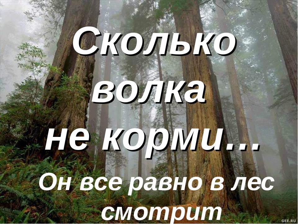 Сколько волка не корми… Он все равно в лес смотрит
